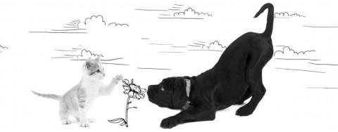 Recensione Green Aura, mangime complementare per cani