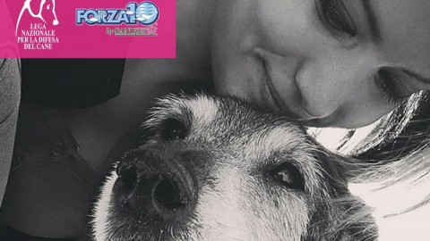 #AdottaUnNonno: cibo gratis a vita per cani di 12 anni