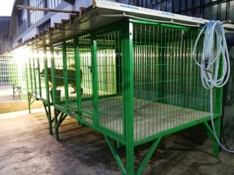 Prato, sequestrati cani importati illegalmente