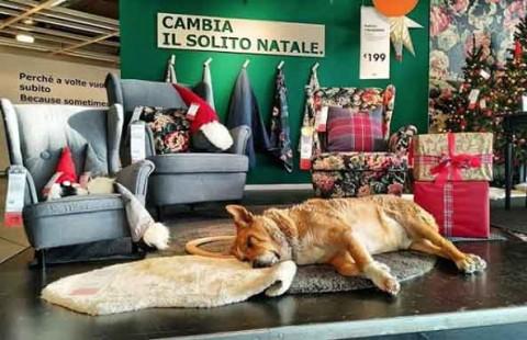 IKEA Catania apre le porte ai cani randagi contro il freddo