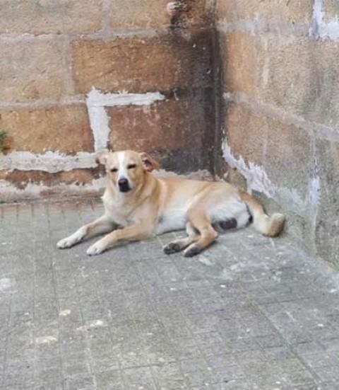Carovigno, criminale spara ad un cane in piena mattina
