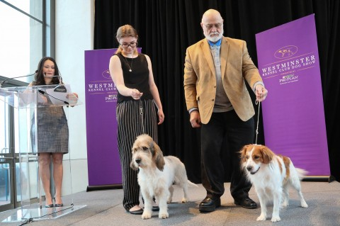 DUE NUOVE RAZZE CANINE al Westminster Dog Show