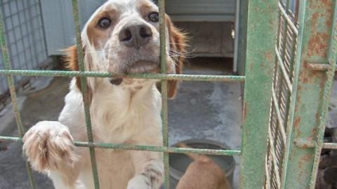Vercelli, adotti un cane? 100 euro di sconto sulla TARI