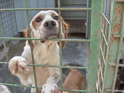 GENOVA: contributo di 250 euro per chi adotta un cane
