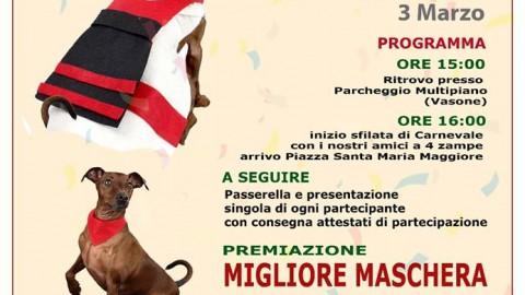 Carnival Dog, ad Alatri la sfilata giunge alla terza edizione