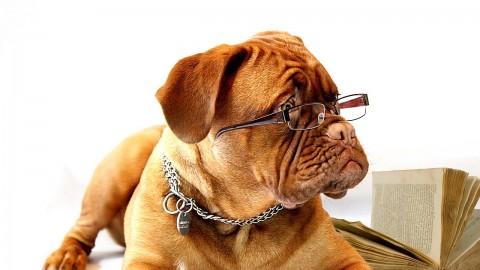 Patentino per proprietari di cani: a Cremona l'ottava edizione