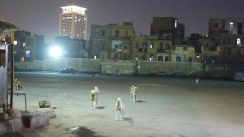 Il Cairo ed Istanbul, le differenze nel gestire il randagismo