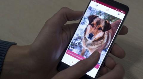 GetPet: dalla Lituania il Tinder per cani