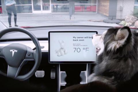 Le auto Tesla si arricchiscono della Dog Mode