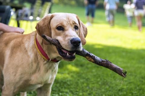 IL CORSO DI FORMAZIONE per proprietari di cani a Vercelli