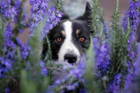 Pet Influencer – COME GESTIRE IL PROFILO SOCIAL DEL TUO CANE