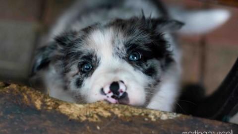 Pet Influencer: COME FOTOGRAFARE IL CANE