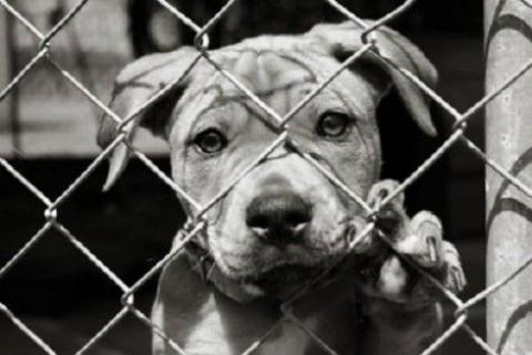 Maruggio, RIMBORSO TARI a chi adotta un cane