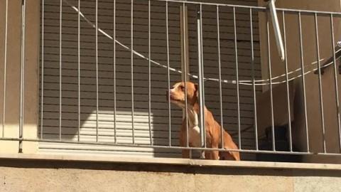 VERONA, quattro agenti della Polizia Locale vegliano sul benessere dei cani