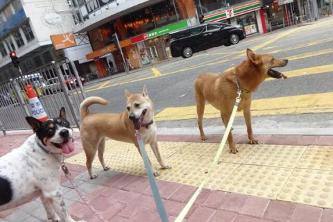 SHENZHEN DOG FRIENDLY: ecco i microchip e le aree cani