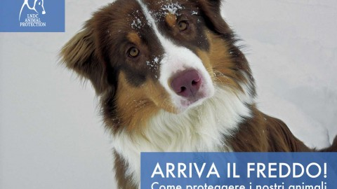 PROTEGGERE GLI ANIMALI DAL FREDDO: i 10 consigli
