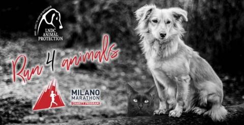 MILANO MARATHON 2020, la corsa benefica per gli animali in difficoltà