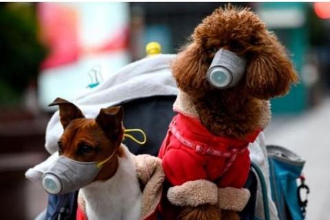 Ad Hong Kong il primo cane contagiato da CoronaVirus