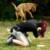 Foto del profilo di Elisa